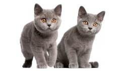 Verbazingwekkend Waar vind ik een kitten te koop met paspoort? - DogCatandCo RR-02