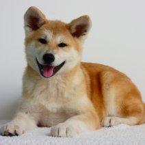 Pourquoi Acheter Un Chiot En Elevage Dogcatandco